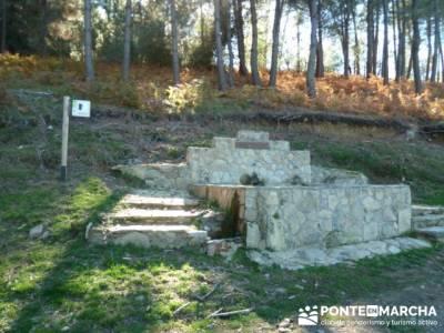 El Castañar de El Tiemblo , Un bosque mágico;rutas para andar por madrid